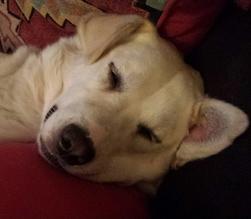 SOS Quebec Ontario Dog Rescue